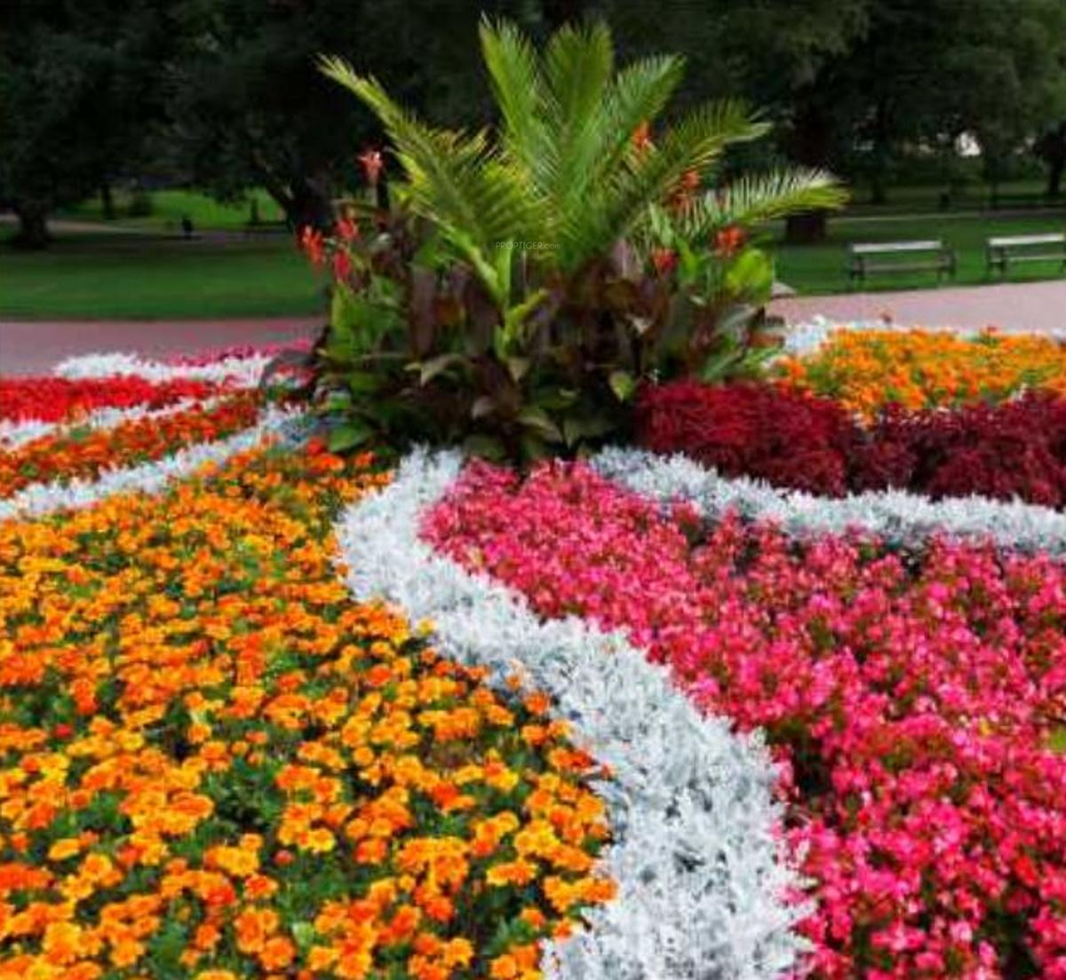 Фото цветов однолеток для клумбы