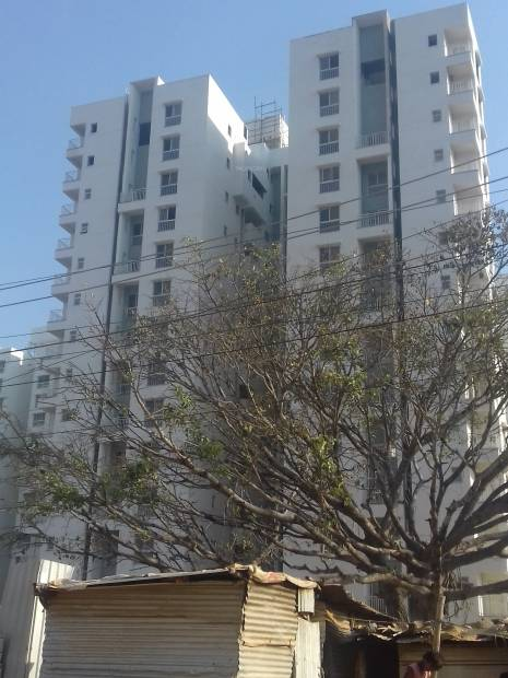 Images for Elevation of Expat The Wisdom Tree Community