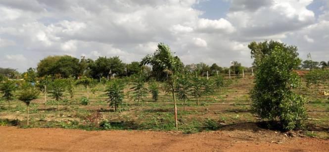 royal-farm Elevation