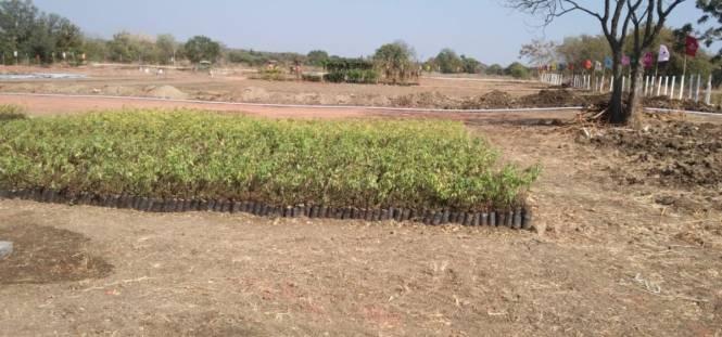royal-farm Plot