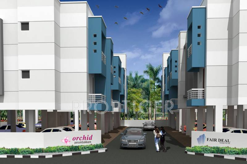 Images for Elevation of Fair Orchid