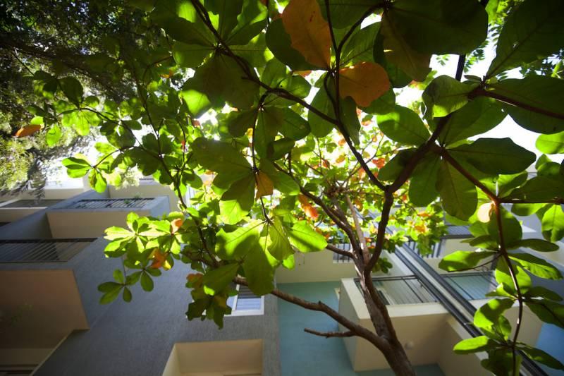 raintree Others