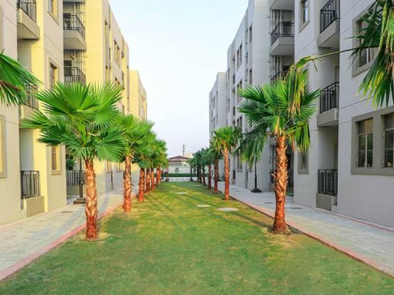 solera Landscape Garden and Tree Planting