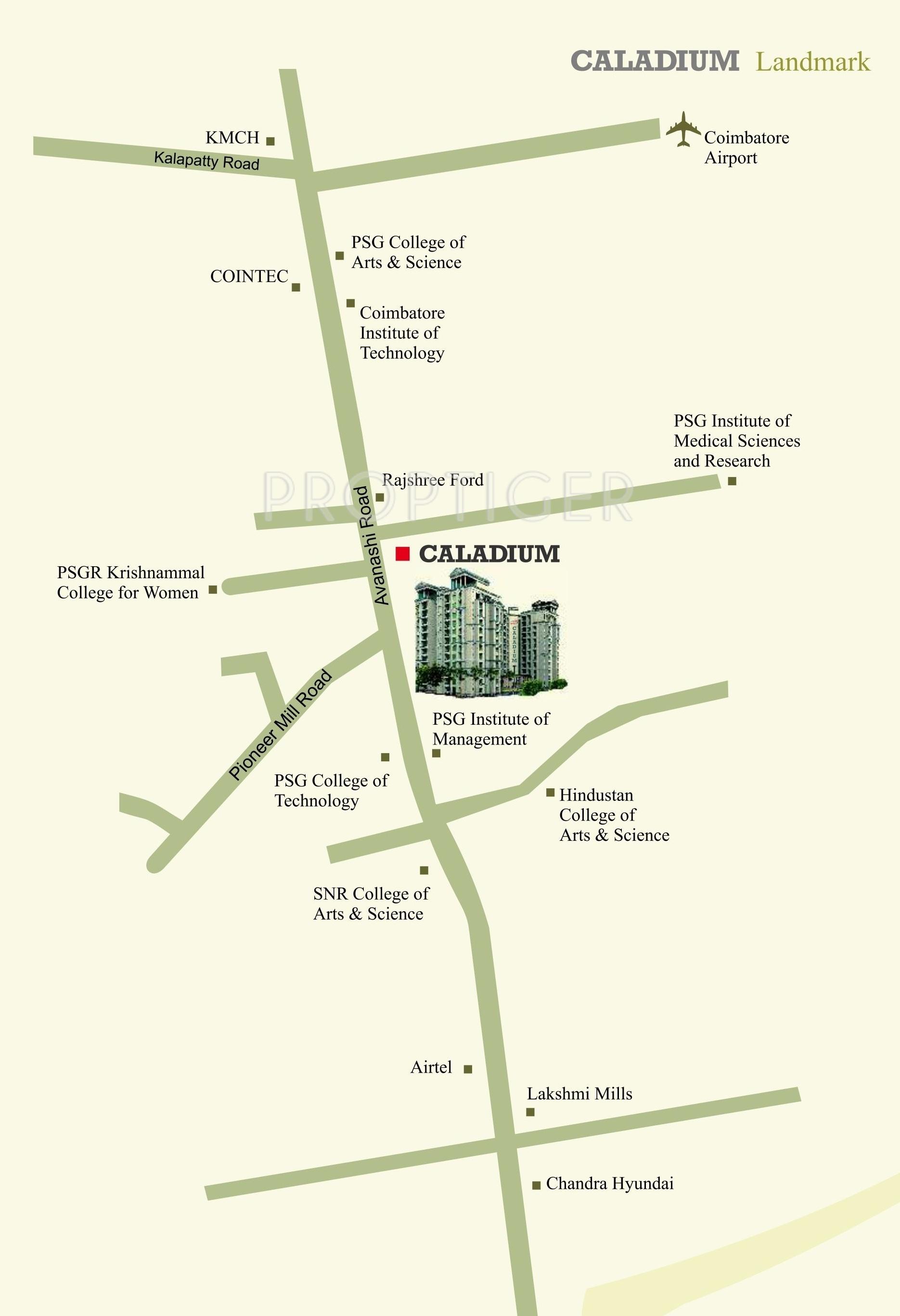 Mayflower Caladium in Peelamedu, Coimbatore - Price